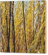 Willow Curtain Wood Print