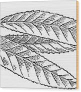 Willow Leaves, Woodcut Wood Print