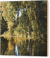 Willow Mirror Wood Print