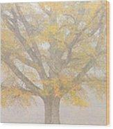 Willow Oak In Fog Wood Print by Bill Swindaman