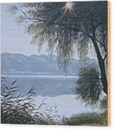 Willow Wood Print