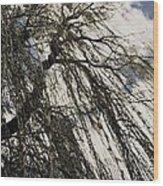 Willow Tree Wood Print by Todd Sherlock