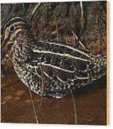 Wilsons Snipe Wood Print