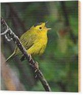 Wilsons Warbler In Song Wood Print