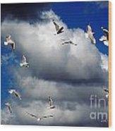 Wind Sailing Seagulls Wood Print by Vicki Ferrari