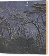 Wind-sculpted Southern Beech Forest Wood Print