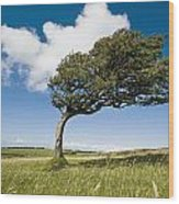 Wind-swept Solitary Tree On Open Grassy Wood Print