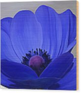Windflower Wood Print