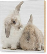 Windmill-eared Rabbits Wood Print