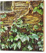 Window And Grapevines Wood Print