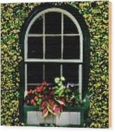 Window On An Ivy Covered Wall Wood Print