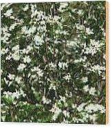 Window Onto Dogwood Blossoms  Wood Print