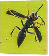 Window Wasp Wood Print