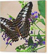 Wing Of Beauty Wood Print