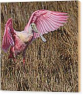 Wings Of Pink And Silk Wood Print