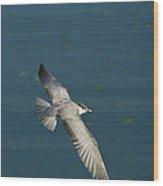 Wings Over Water Wood Print