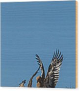 Wings Up Wood Print