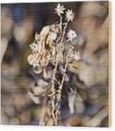 Winter Blossom Fairy Wood Print