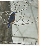 Winter Bluebird Wood Print