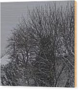 Winter Cold Branches Wood Print