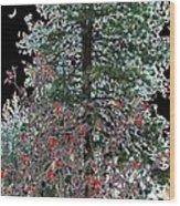 Winter Color Wood Print