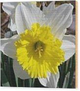 Winter Daffodil  Wood Print