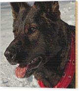 Winter Dog Wood Print by Karol Livote