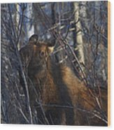 Winter Food Wood Print