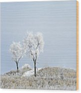 Winter Frost Wood Print by Julie Palencia