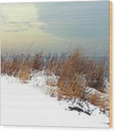 Winter Grasses In Snow Wood Print