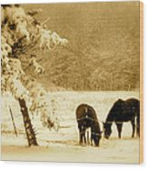 Winter Grazing Wood Print