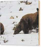 Winter Guide Wood Print