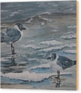 Winter Gulls Wood Print
