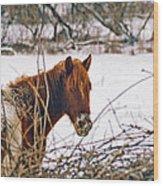 Winter Horse Landscape Wood Print