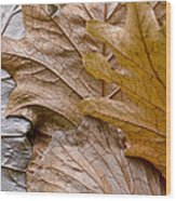 Autumn Leaves Of Gold Wood Print