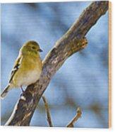 Winter Morning Song Bird Wood Print