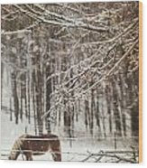 Winter Scene With Horse Grazing In Wooded Pasture Wood Print
