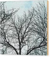 Winter Tree 1 Wood Print