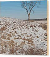 Winter Tree Nachusa Grasslands Wood Print