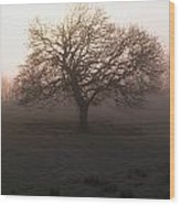 Winter Tree On A Frosty Morning, County Wood Print