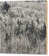 Winter Trees Covered In Ice Wood Print