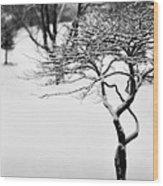 Winter Whisper Wood Print