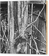 Wintered And Weathered Wood Print