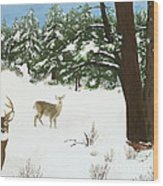Wintering Whitetails Wood Print