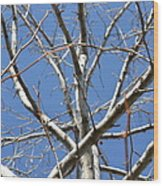 Winter's Branches Wood Print by Naomi Berhane