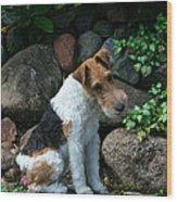 Wirehair Fox Terrier Wood Print
