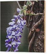 Wisteria Wood Print