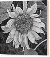 Wistful One Monochrome Wood Print