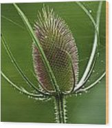 Without Petals Wood Print