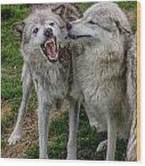 Wolf Confab Wood Print